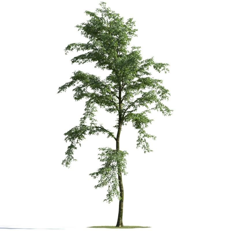 tree 14 AMC01