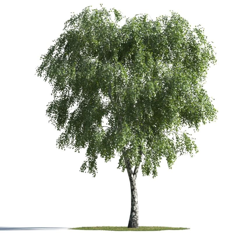 tree 91 AMC1