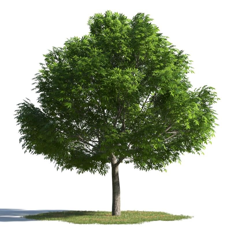 tree 32 AMC01
