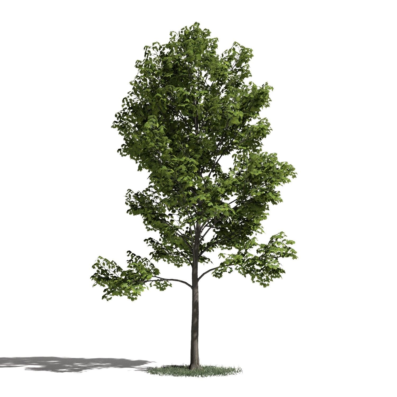 Tree 28 amb1