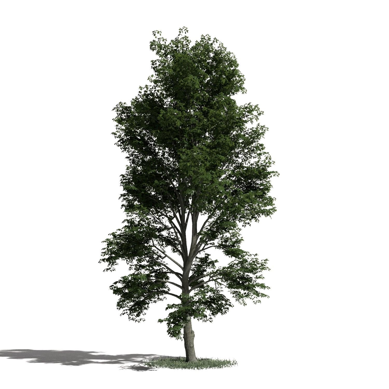 Tree 52 AM1 for Blender Archmodels