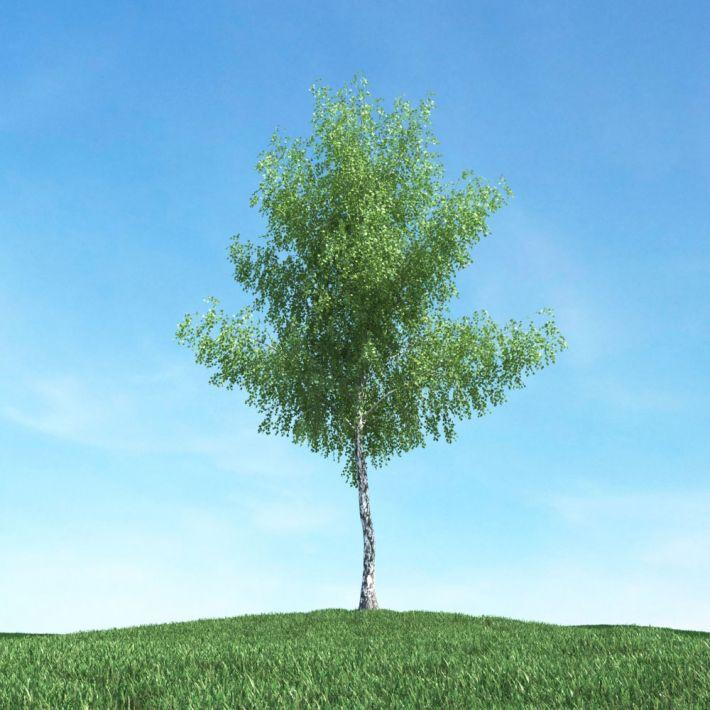 tree 21 AM117 Archmodels