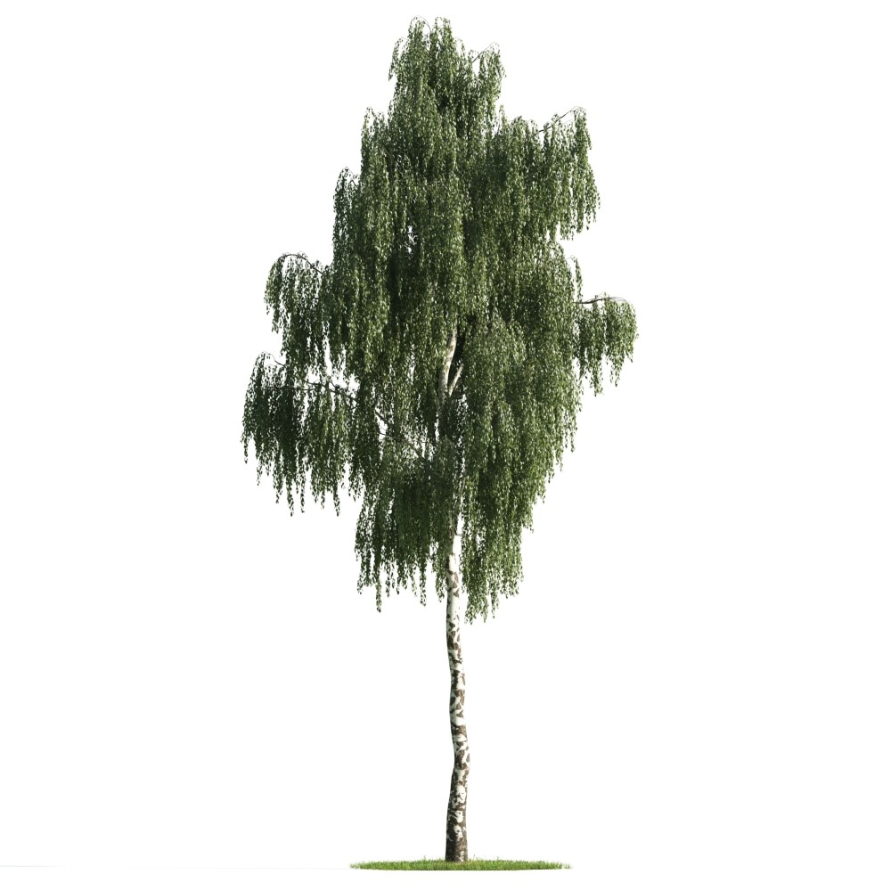 Tree 6 AM176 Archmodels