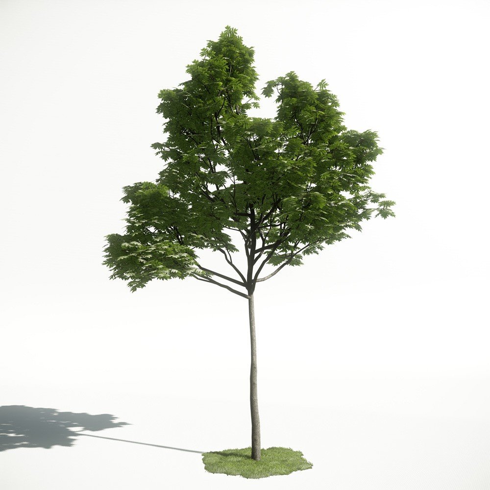 Tree 37 AM1 for CryEngine Archmodels