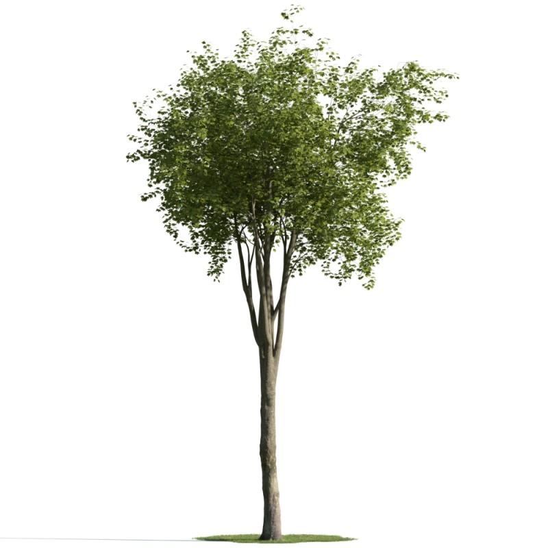 tree 19 AM163 Archmodels