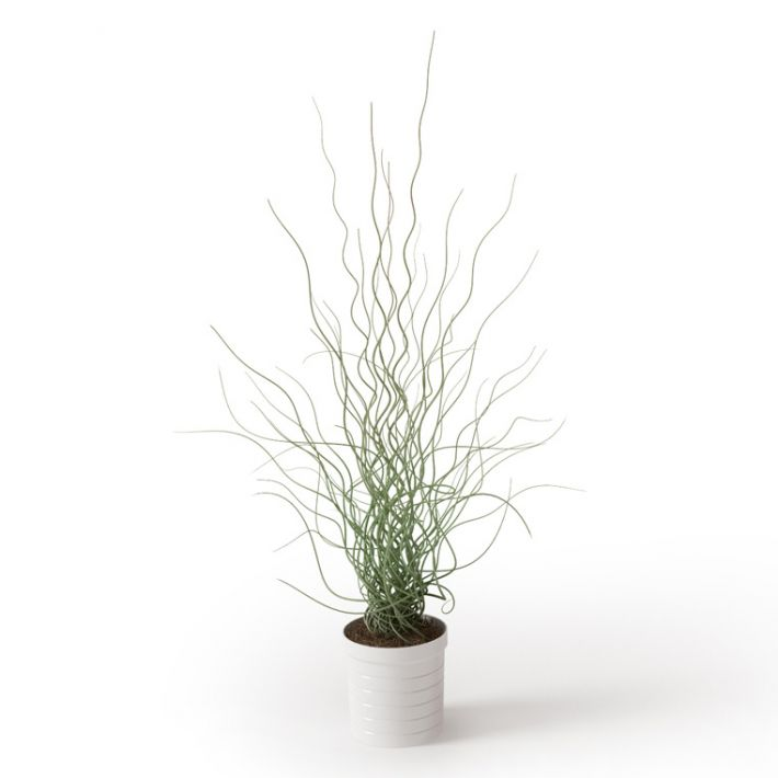 Plant 38 Archmodels vol. 66
