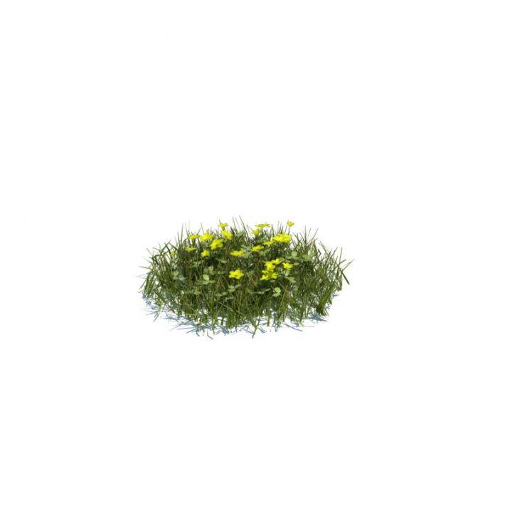 simple grass medium 119 am124