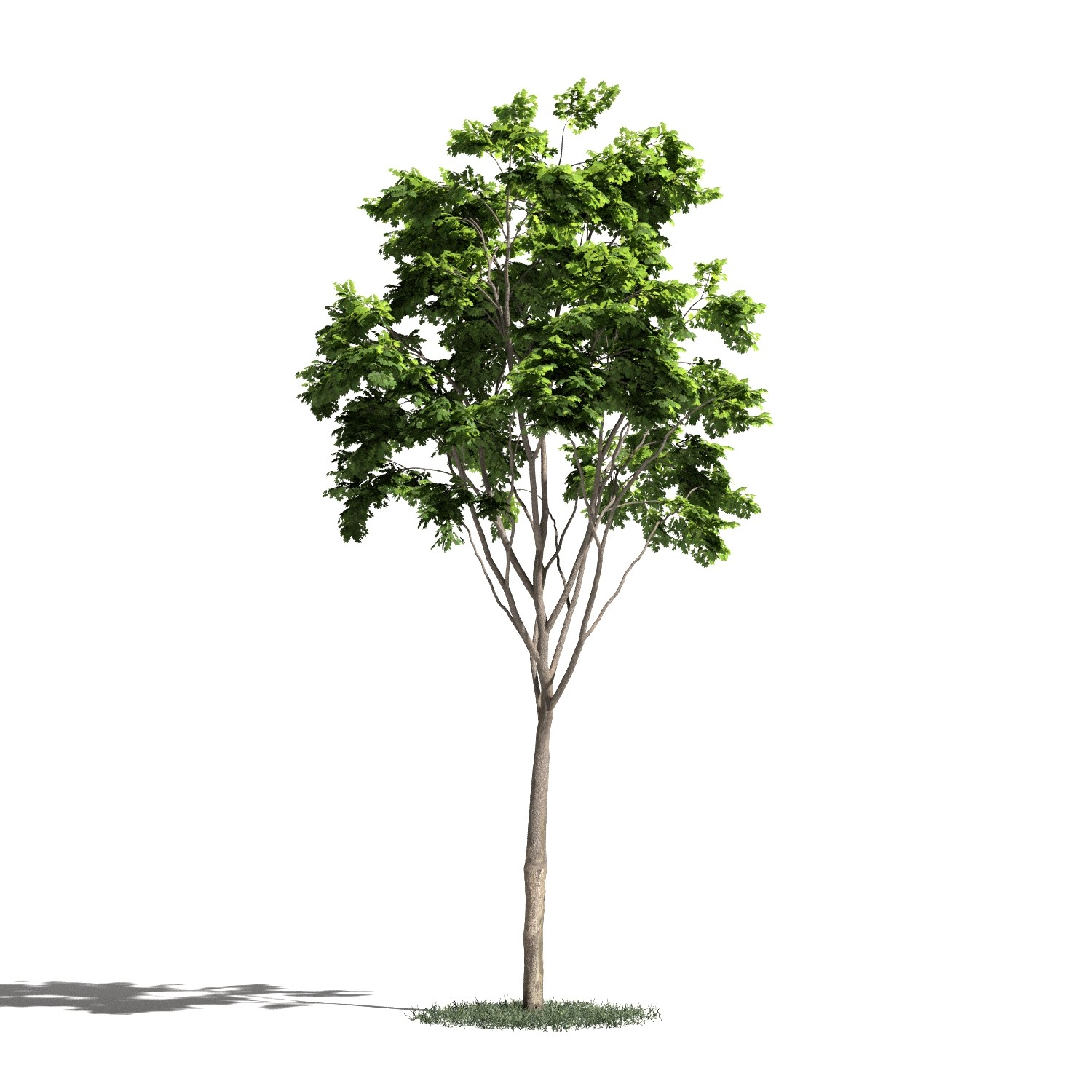 Tree 21 AM1 for Blender Archmodels