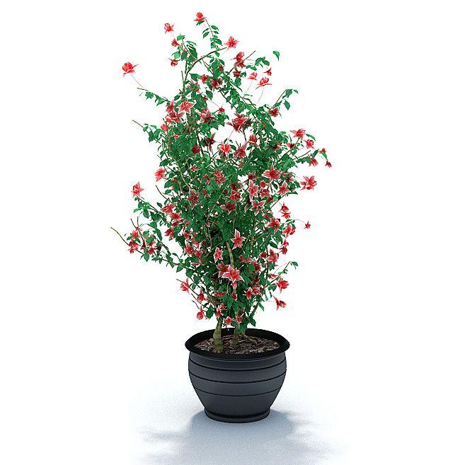 Plant 47 AM31 Archmodels