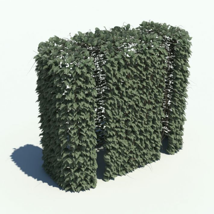 hedge 143 AM126 Archmodels