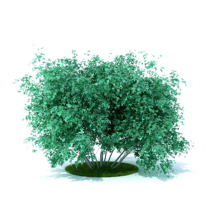 plant 21 AM105 Archmodels