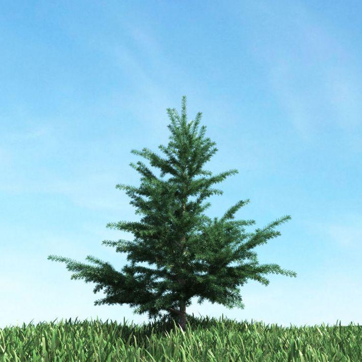 tree 53 AM117 Archmodels