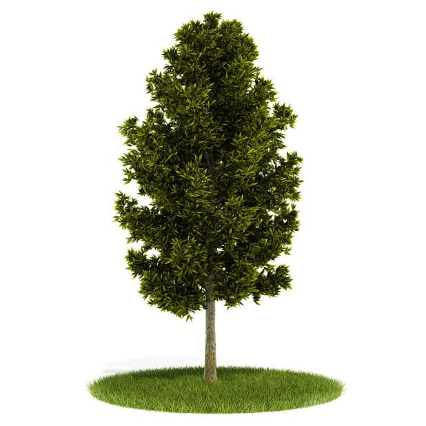 Plant 57 AM52