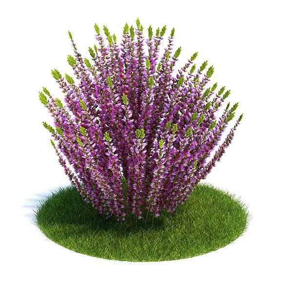 Calluna Plant 3 AM61 Archmodels