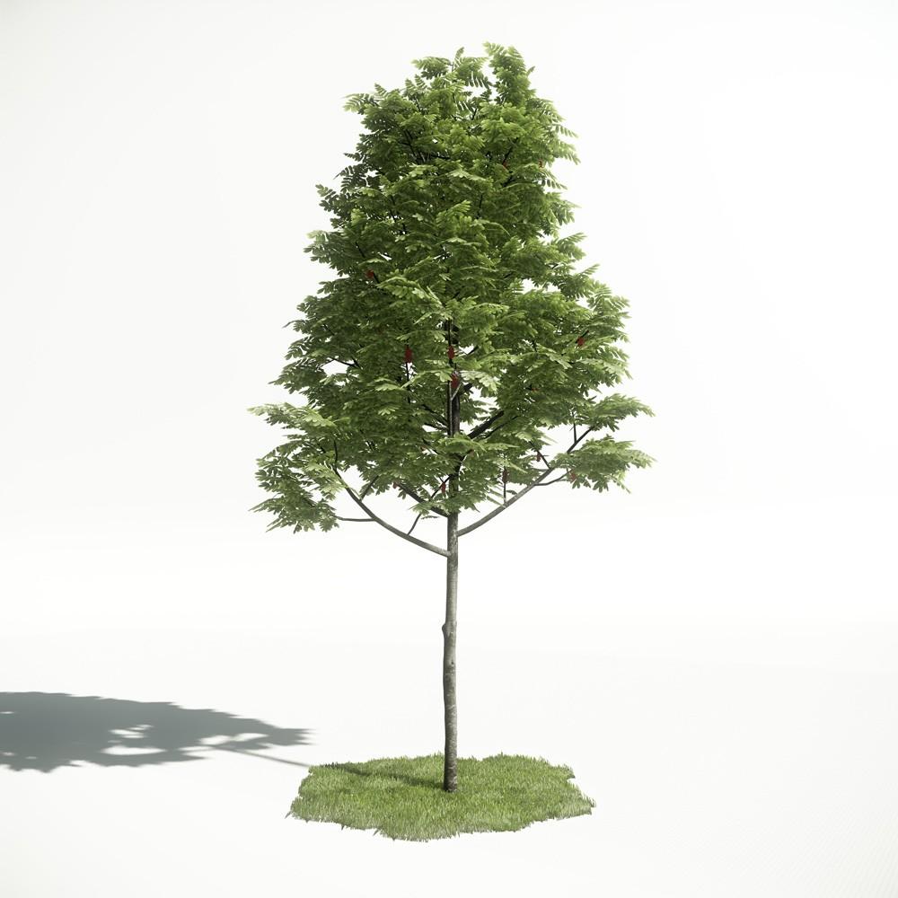 Tree 02 amce1