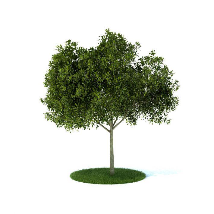 plant 35 am105