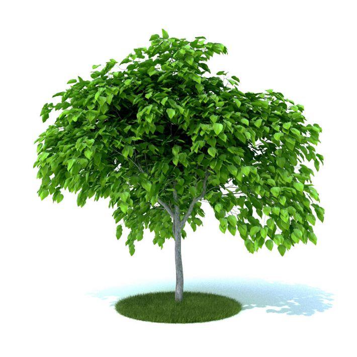plant 44 AM105 Archmodels