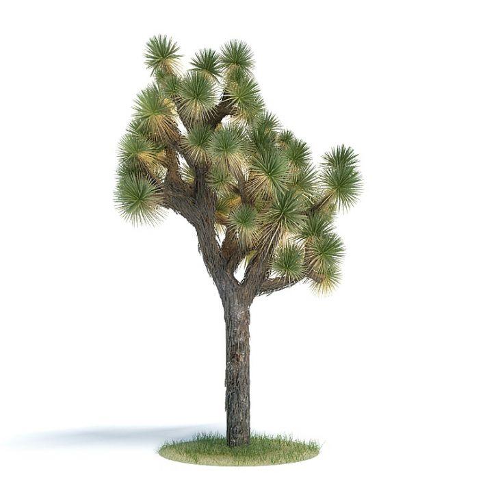 Yucca brevifolia Plant 53 AM61 Archmodels