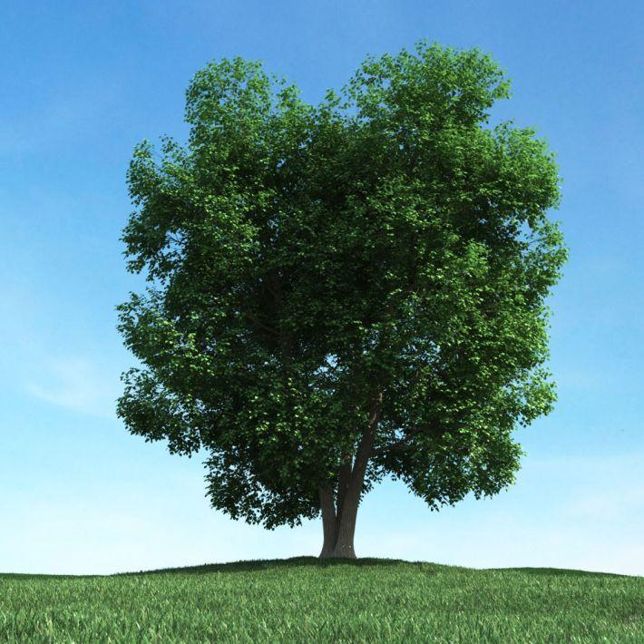 tree 48 AM106 Archmodels