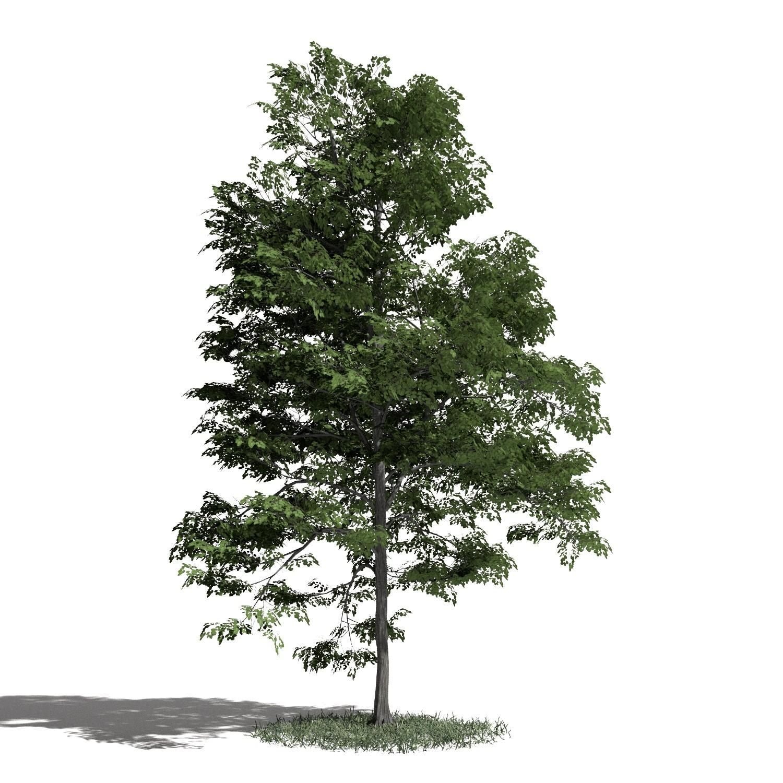 Tree 40 AM1 for Blender Archmodels