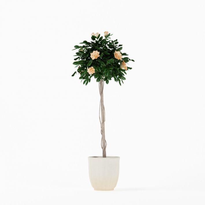 Plant 16 AM75 Archmodels