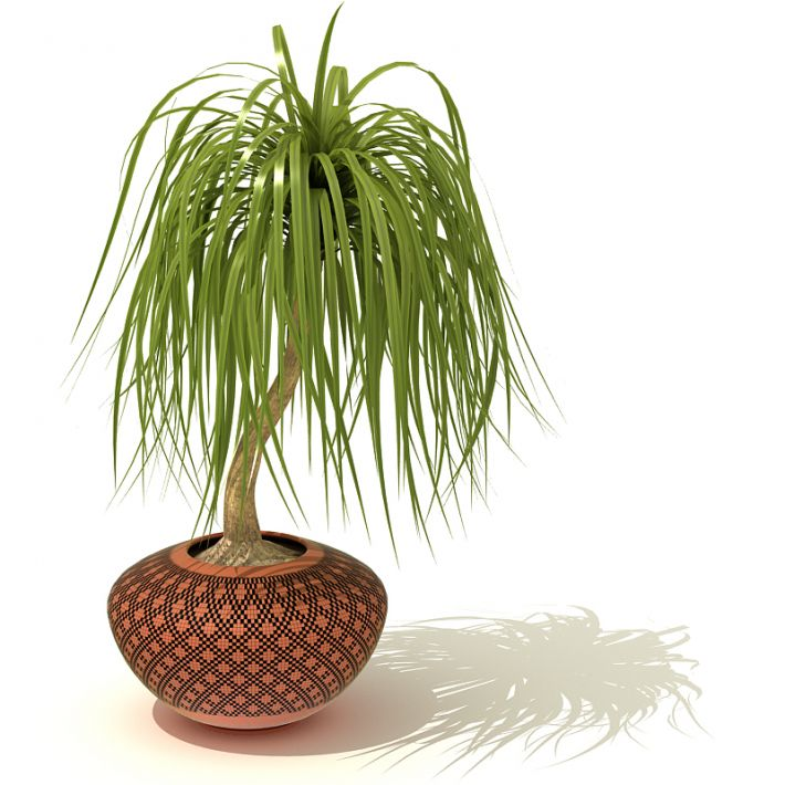 plant 37 AM41 Archmodels