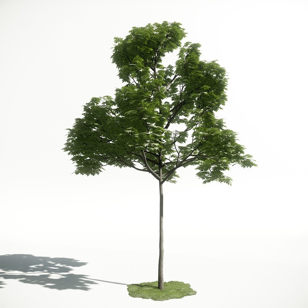 Tree 38 AM1 for CryEngine Archmodels
