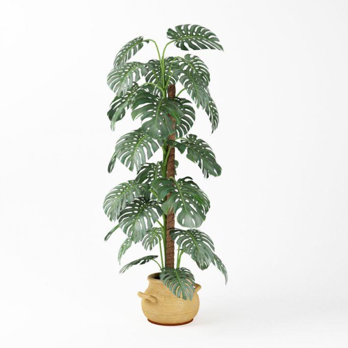 Plant 6 AM75 Archmodels