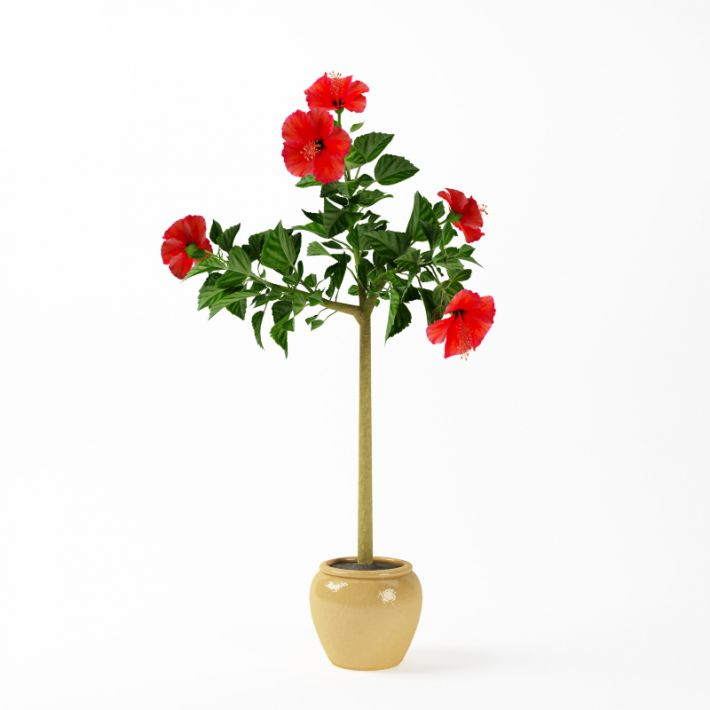 Plant 36 AM75 Archmodels