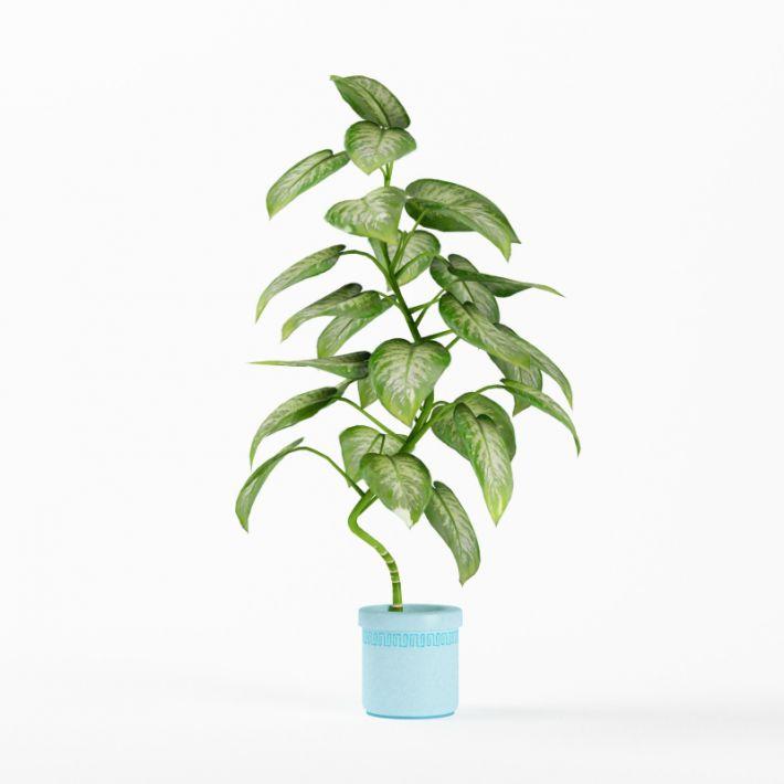Plant 4 AM75 Archmodels