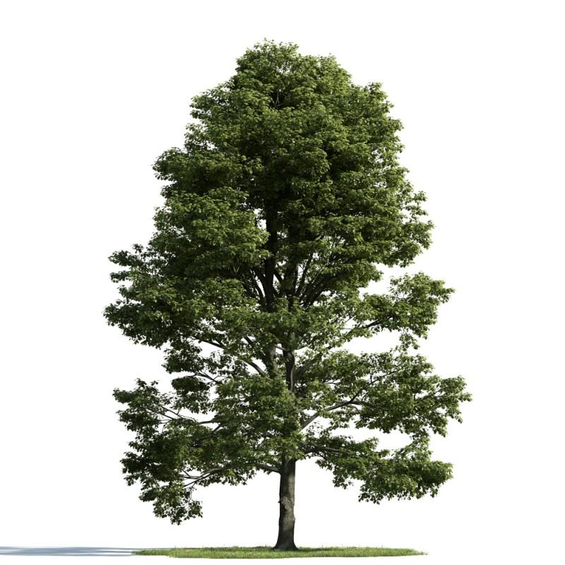 tree 53 am163