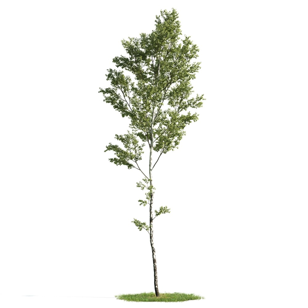 Tree 5 AM176 Archmodels