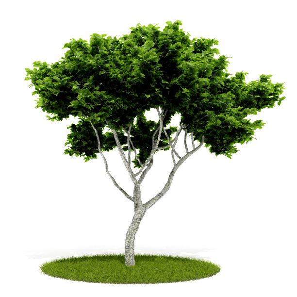 Plant 46 AM52 for Cinema4D Archmodels
