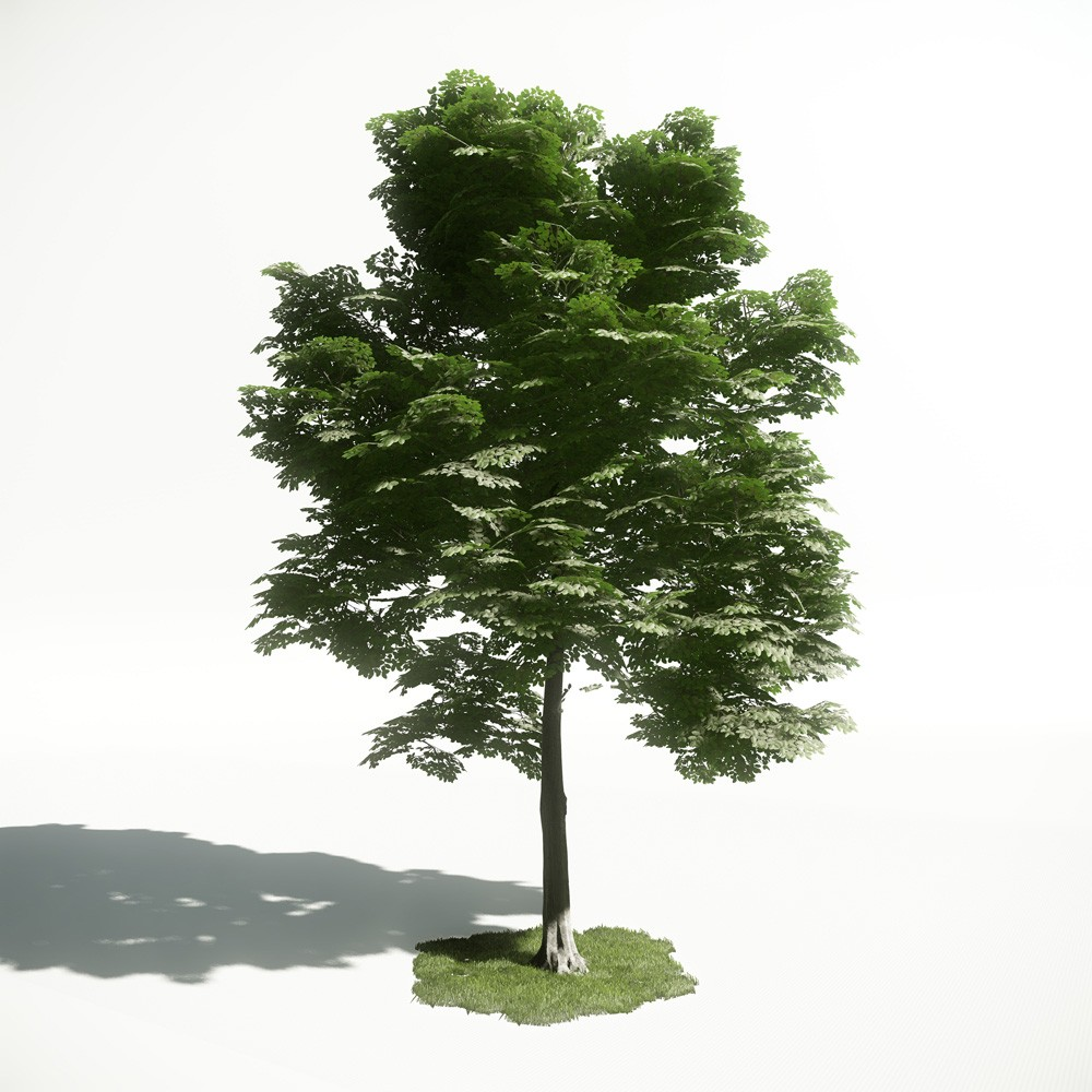 Tree 14 AM1 for CryEngine Archmodels