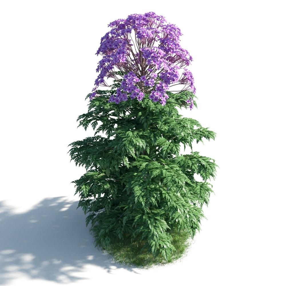 plant 12 AM183