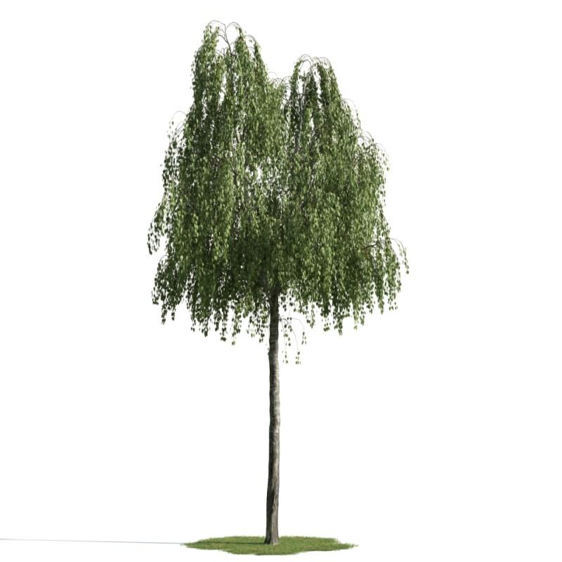 tree 17 AM163 Archmodels