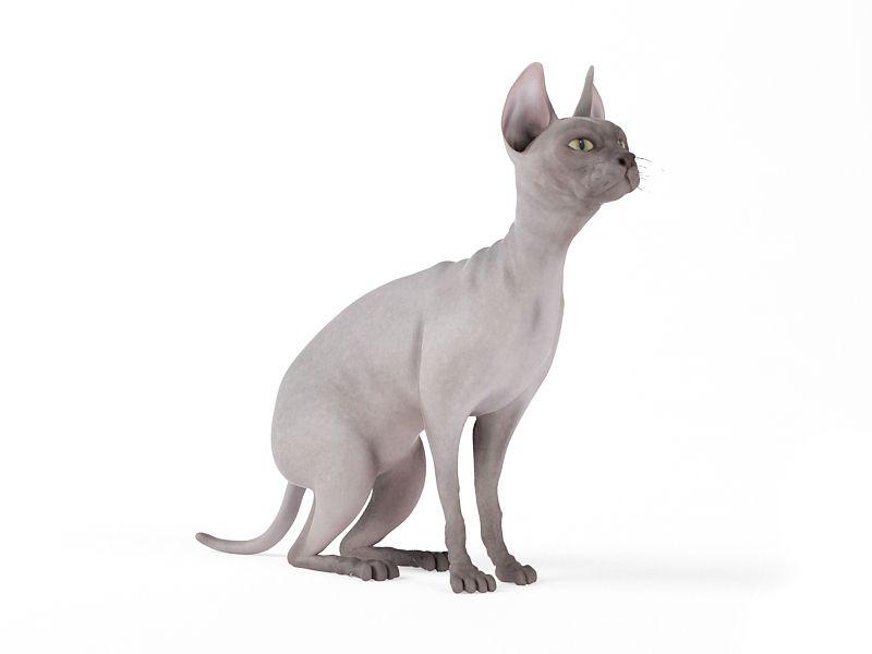 cat 62 AM83 Archmodels