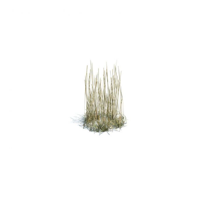 simple grass small 139 am124
