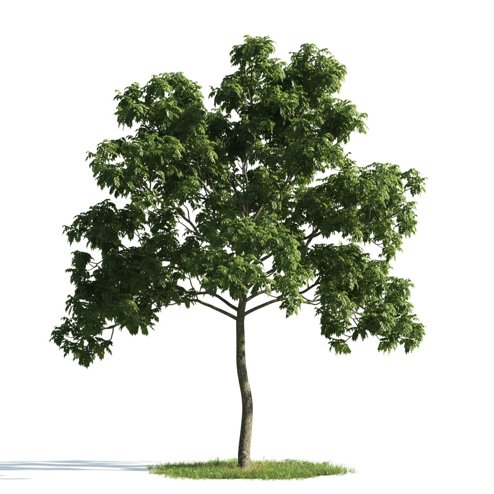 Tree 52 am176