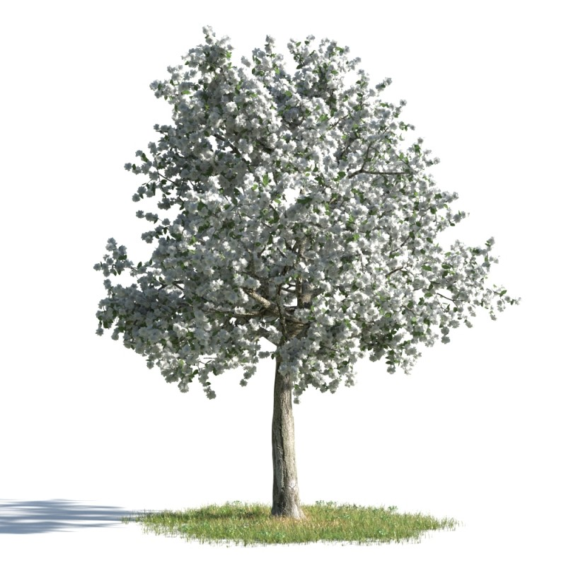 tree 38 AMC01