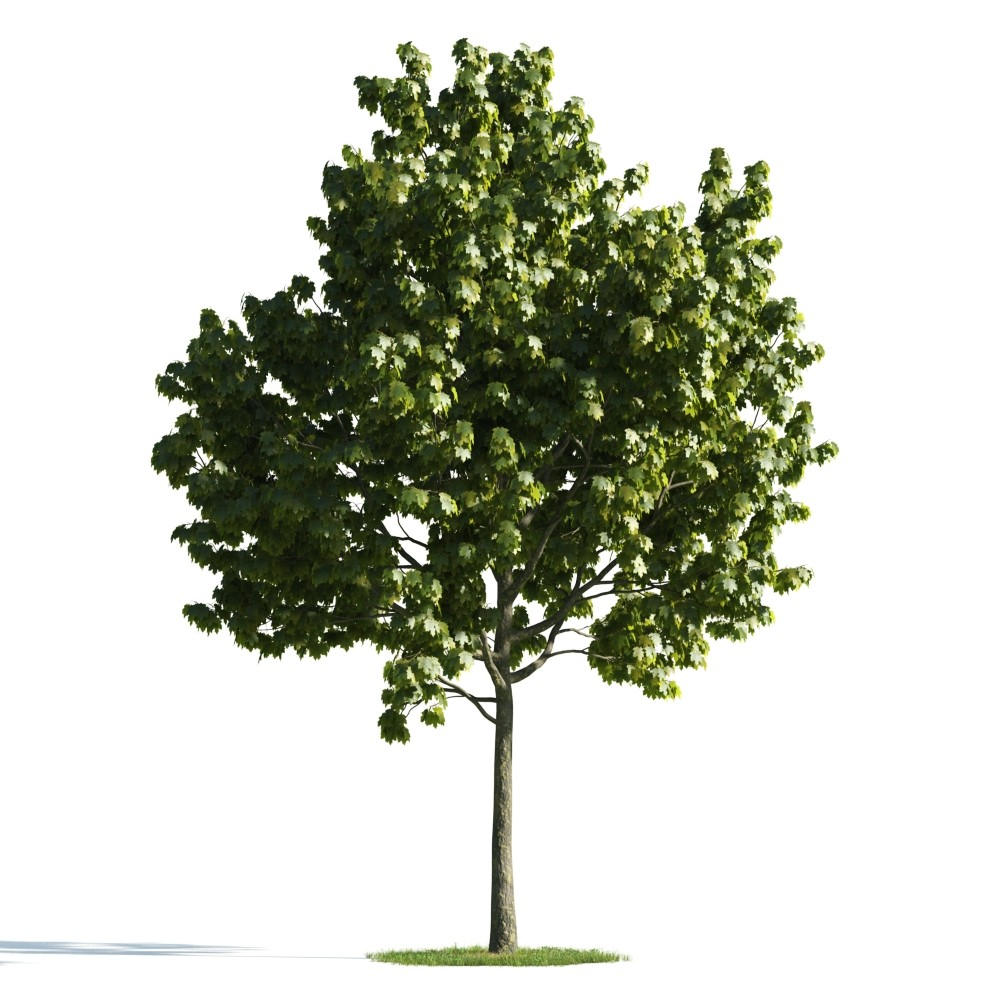 100 Elm Tree Symbolism Moonstruck Madness Meaning