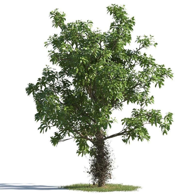 tree 7 AMC1