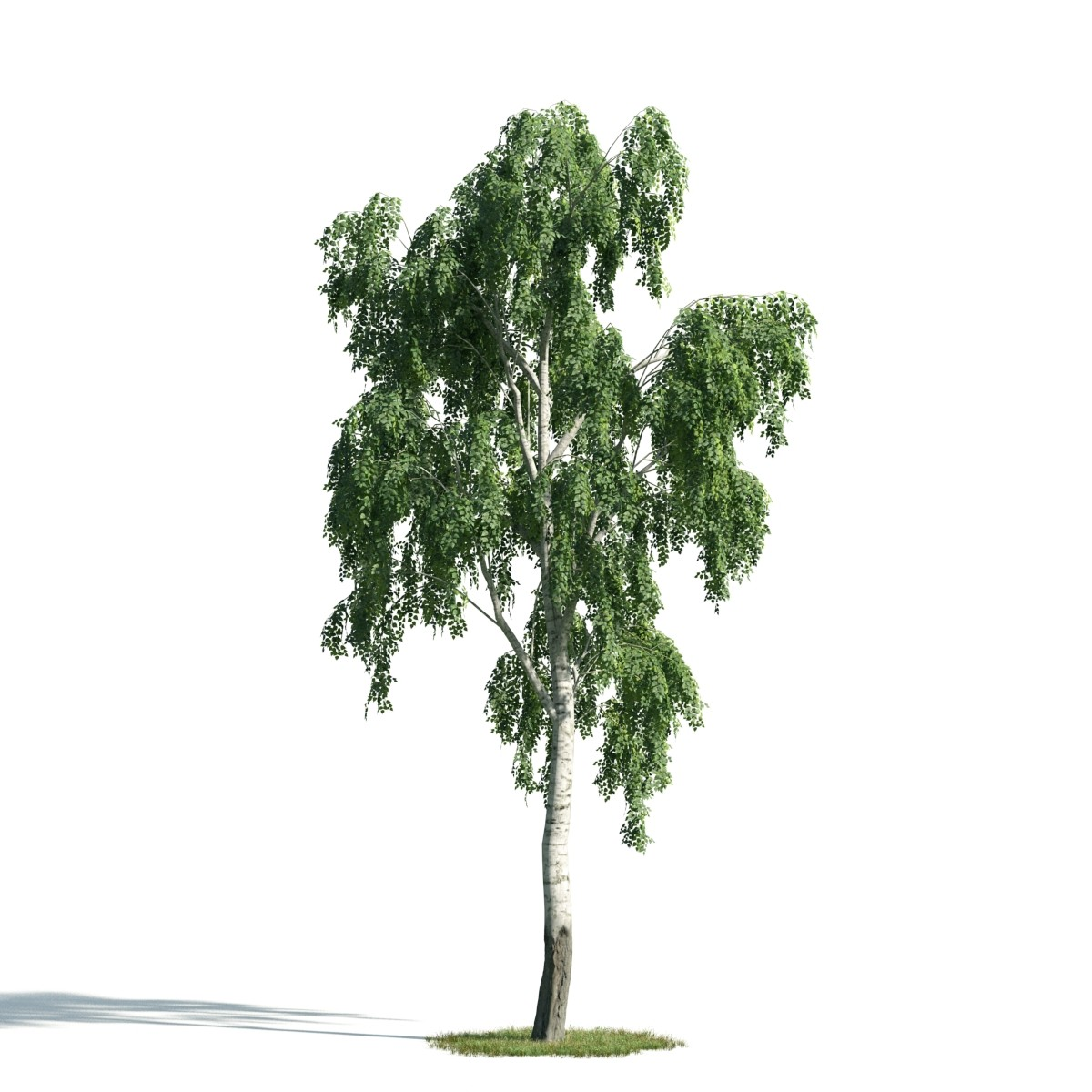 Tree 18 AM171 Archmodels