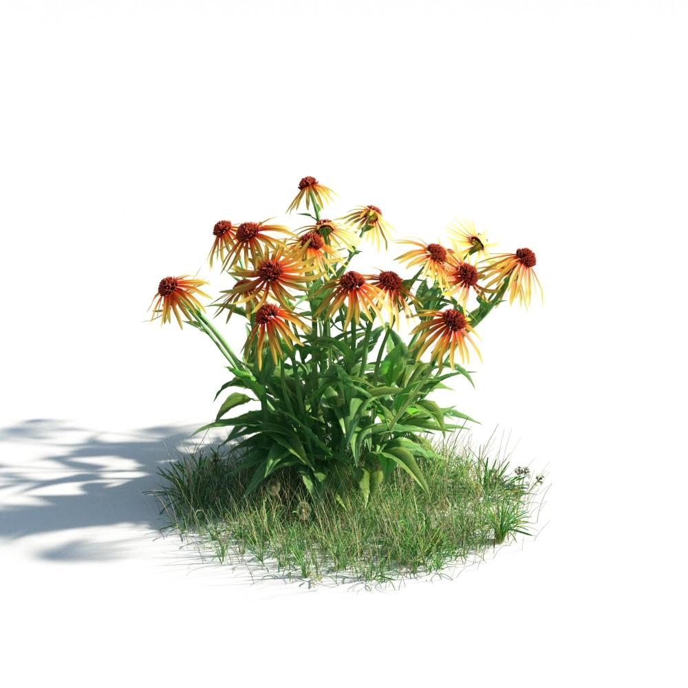 plant 34 AM183