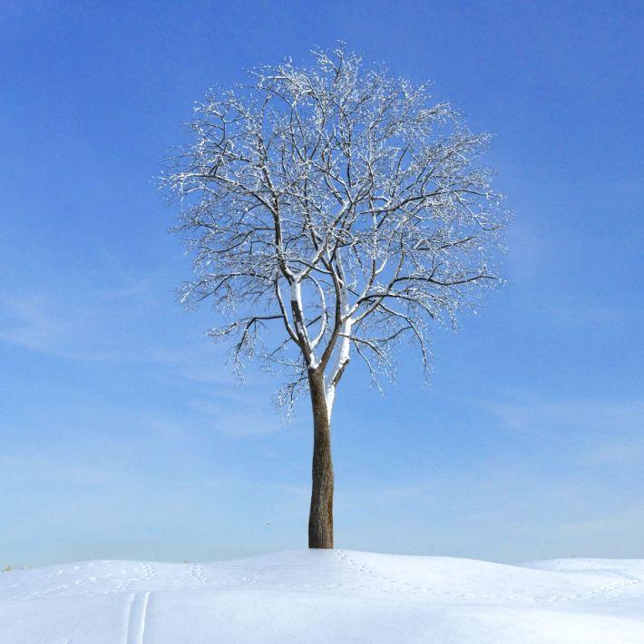 elm tree 47 AM100 Archmodels