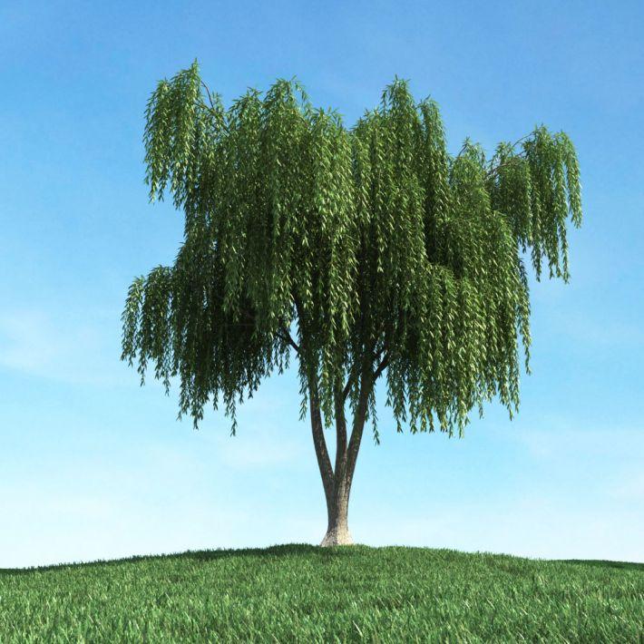 tree 18 AM106 Archmodels