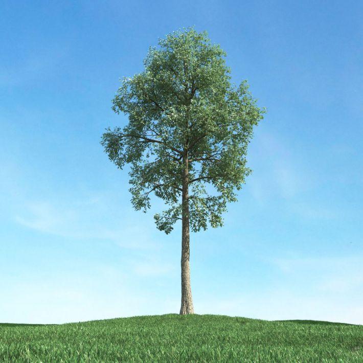 tree 46 AM117 Archmodels