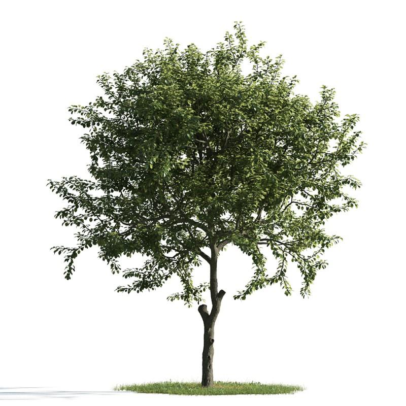 tree 07 am163