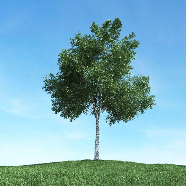 tree 4 AM106 Archmodels