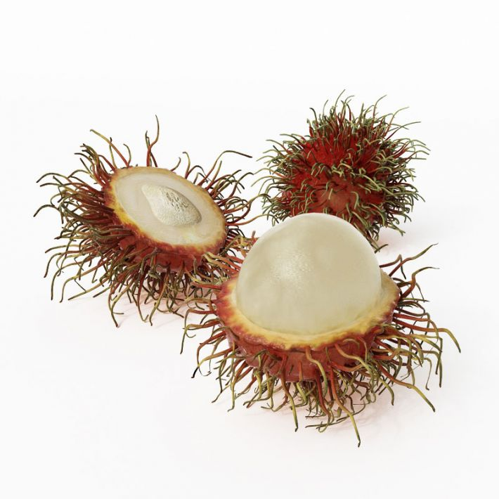 rambutan 18 AM130 Archmodels